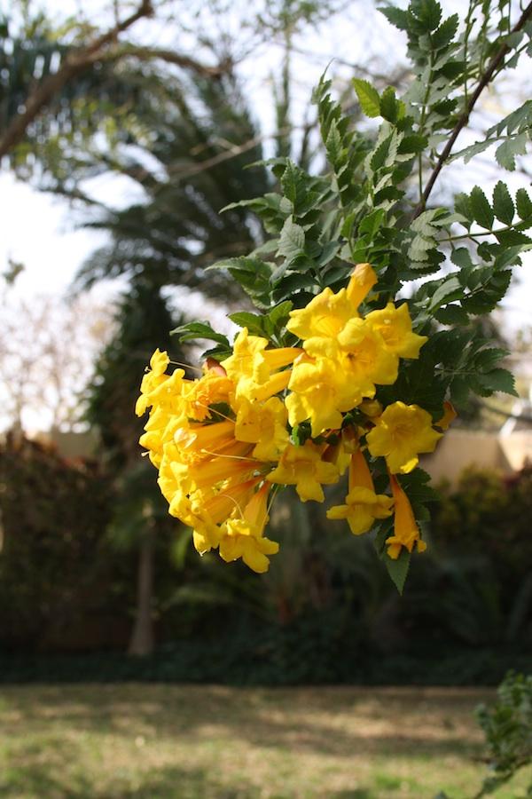 Forår i Israel