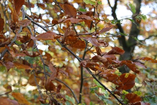 Efterårs stemning i november skoven