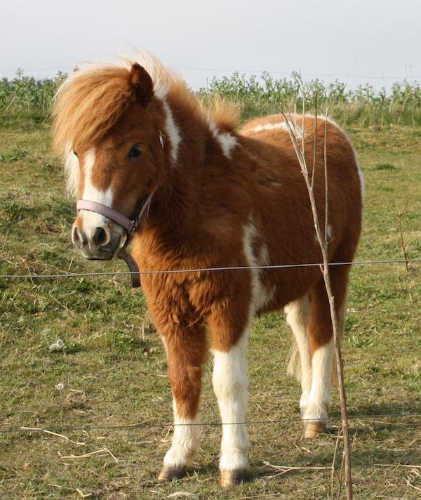 Forår og ny pony